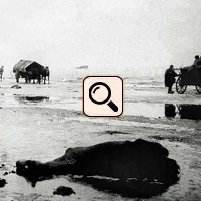 Frisches Haff - Totes Pferd